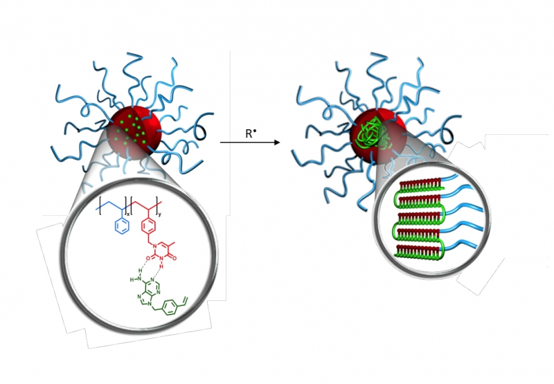 Graphic illustration of template radical polymerization in nanoreactors (selfassembled micelles)